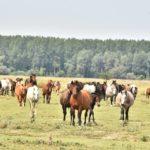 PREPORUKA: Krčedinska ada-skriveni dragulj turizma na Dunavu