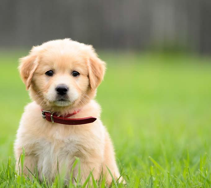 RASADNIK BREST: Međunarodna izložba pasa