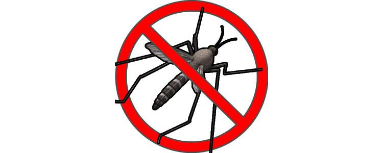 DUGO OČEKIVANO: Počinje zaprašivanje komaraca
