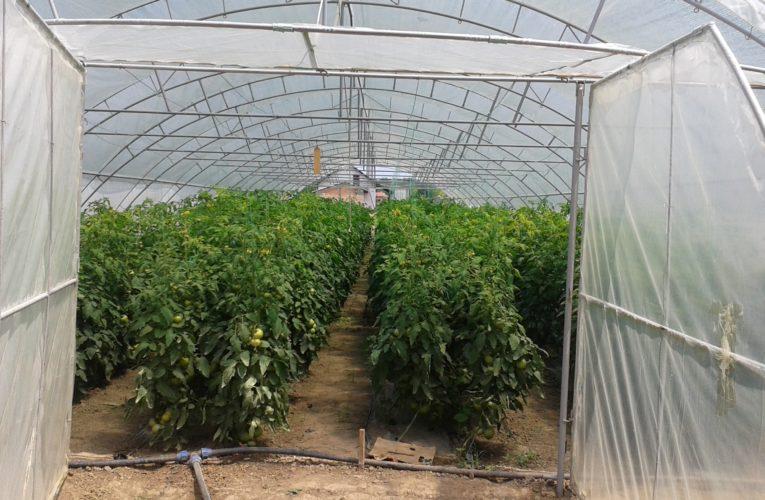 Počelo podnošenje zahteva za nabavku novih mašina i opreme u biljnoj proizvodnji