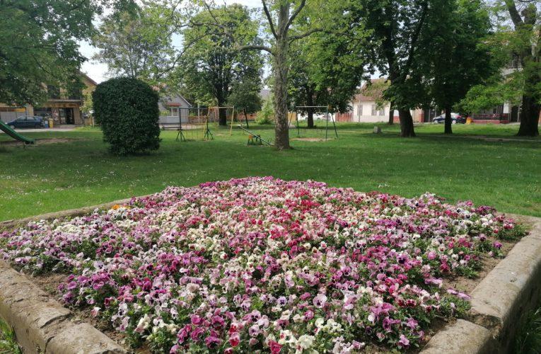 Proleće u parku kraljice Marije u Inđiji (VIDEO)