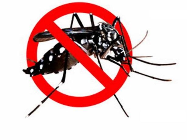 Danas se vrši suzbijanje larvi komaraca na teritoriji Inđije