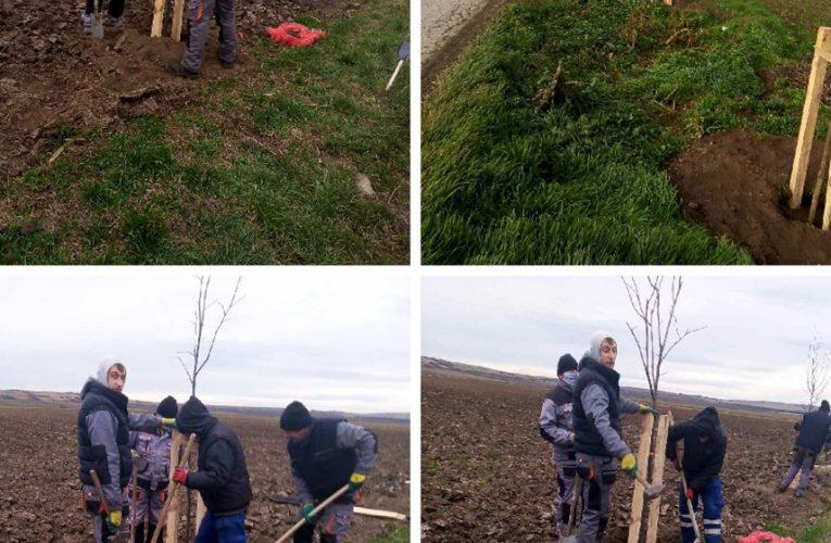 POŠUMLJAVANJE: 200 novih sadnica između Beške i Krčedina