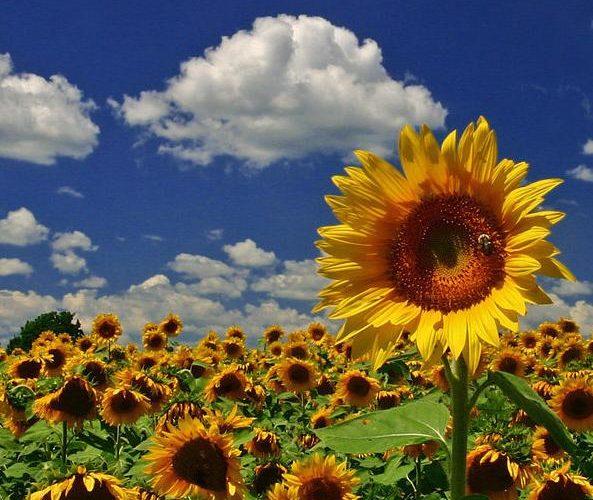 U FOKUSU: Objavljeni svi pokrajinski konkursi za poljoprivredu