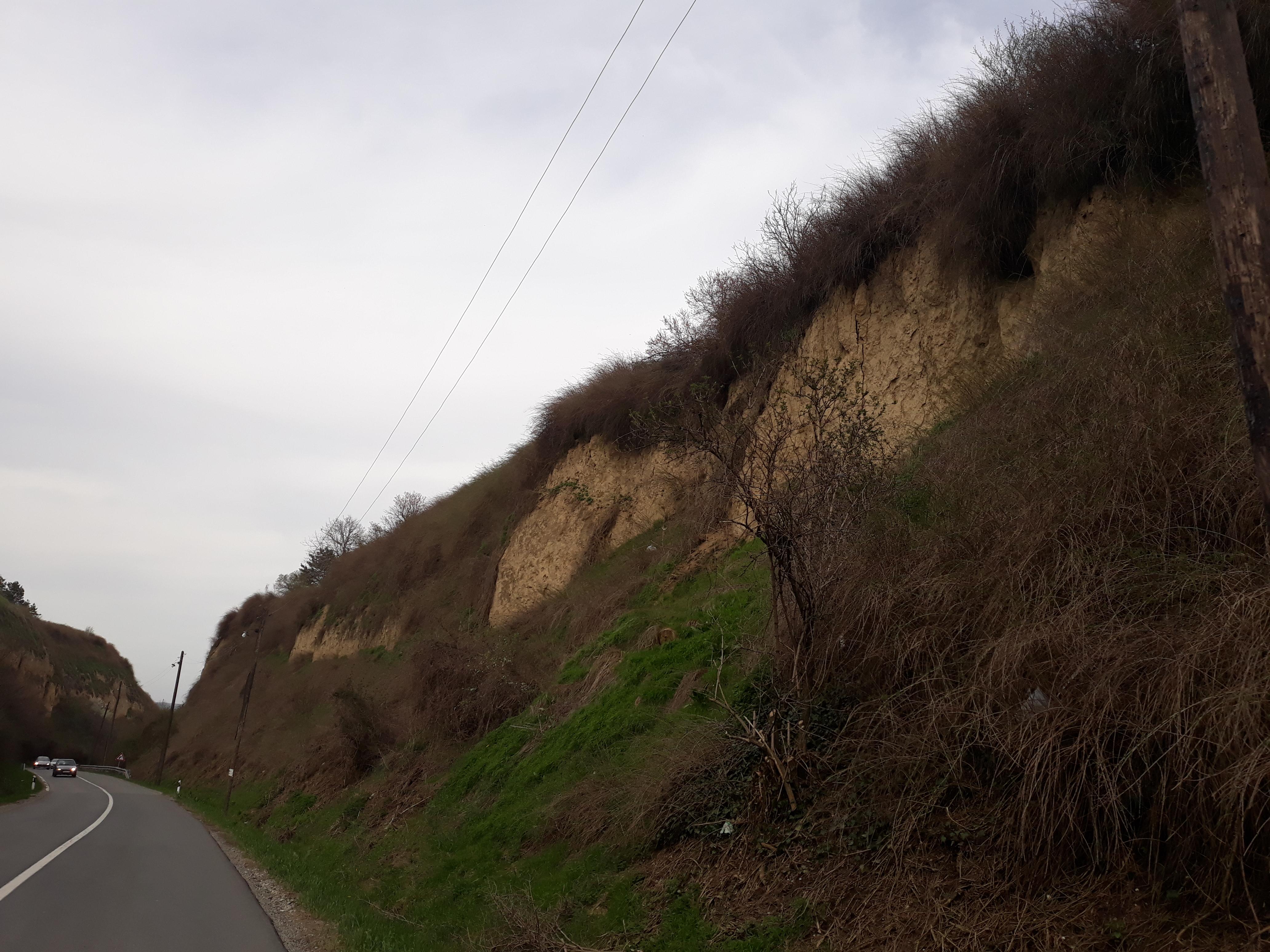 LEDENO DOBA UŽIVO: Lesni profil u Starom Slankamenu jedinstven u Evropi