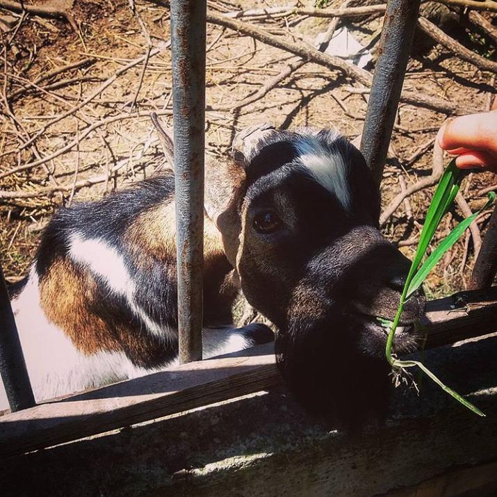 """POMOĆ OPŠTINE Zoo Vrtu """"Koki"""": Životinje SITE-Slavko ZADOVOLJAN….(FOTO)"""
