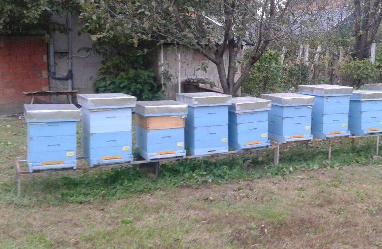 AGRO VEST: Od 1. aprila počela prijava stanja na pčelinjaku